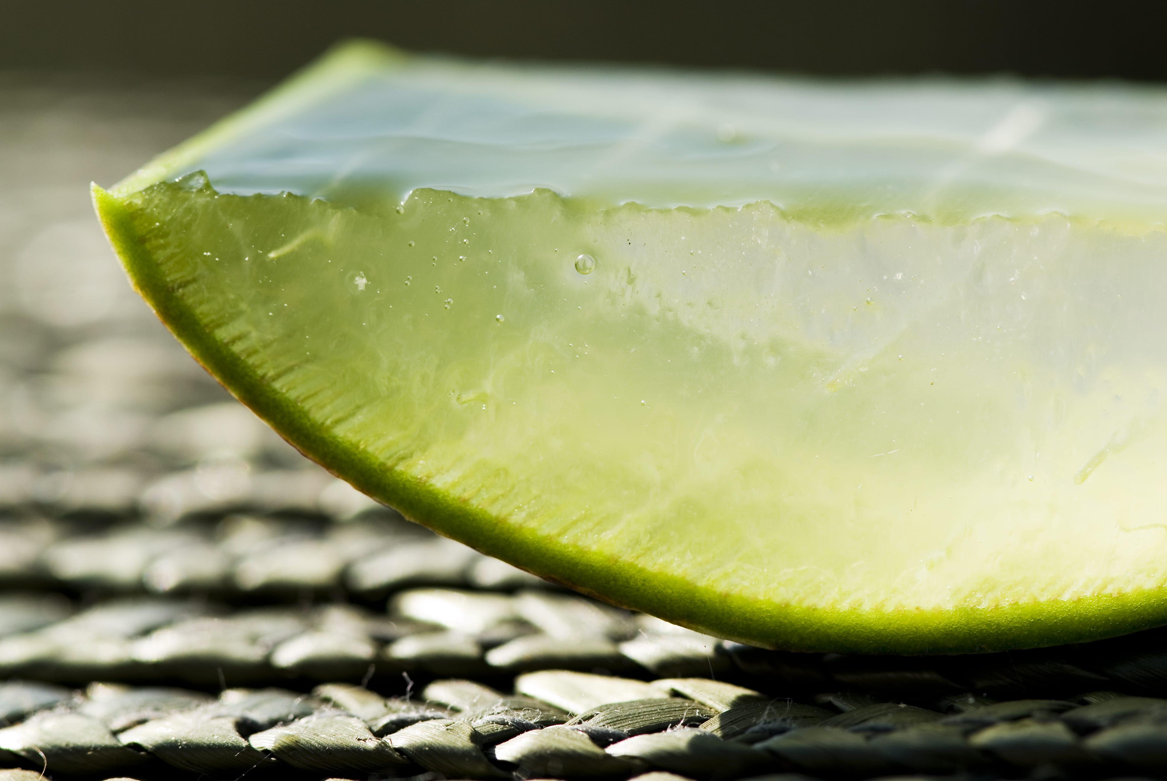 aloe-vera-pflanzenstueck